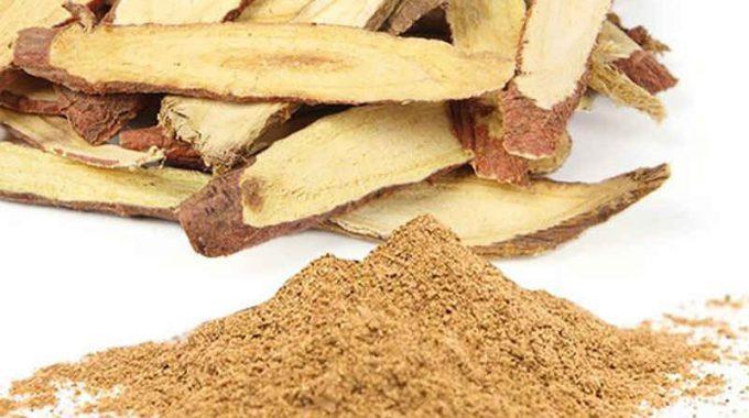 Cam thảo có tác dụng gì và lưu ý khi dùng (Glycyrrhiza uralensis)