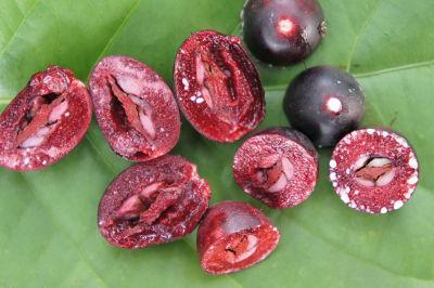 Quả và hạt si rô (xi rô)