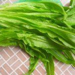 Rau diếp (du mạch thái), loại này thường được dùng làm thuốc