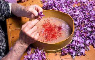Nhụy hoa nghệ tây giá bao nhiêu