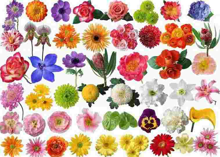 Sự đa dạng của các loại hoa trên thế giới