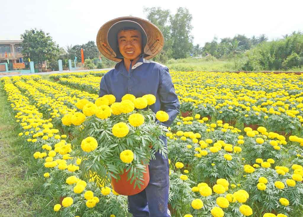Người nông dân bên những chậu hoa vạn thọ vàng tươi (bông nhãn thọ)