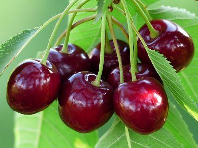 Quả cherry (anh đào) làm chậm lão hóa và những lợi ích cho sức khỏe