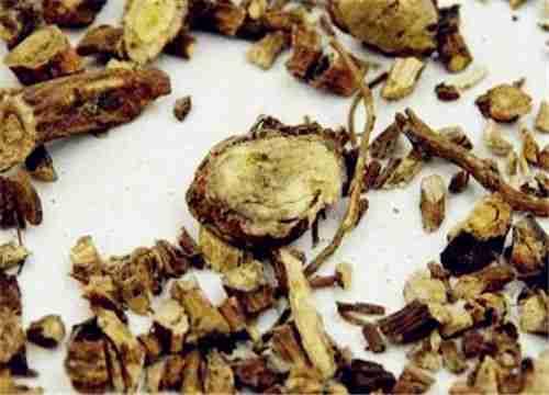 Sơn đậu căn (rễ cây sơn đậu)