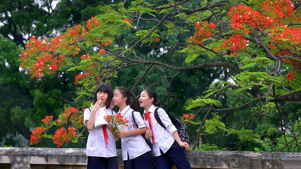 Hoa phượng tuổi học trò