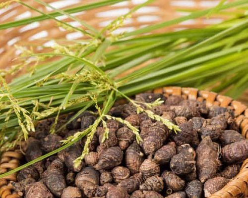 Hương phụ (củ cỏ cú, cỏ gấu)