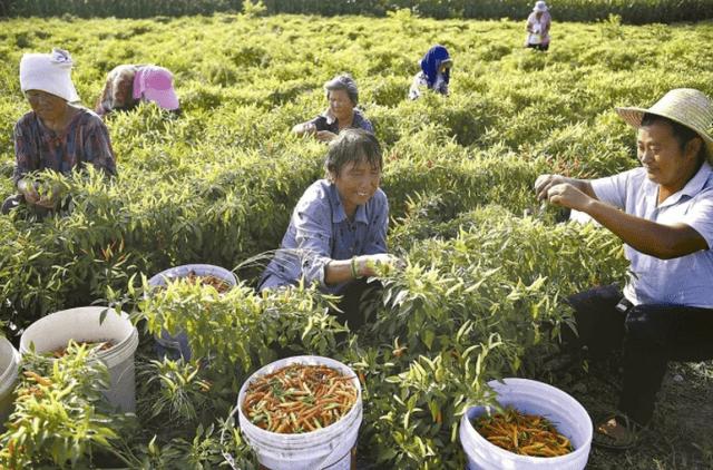 Nông dân Trung Quốc