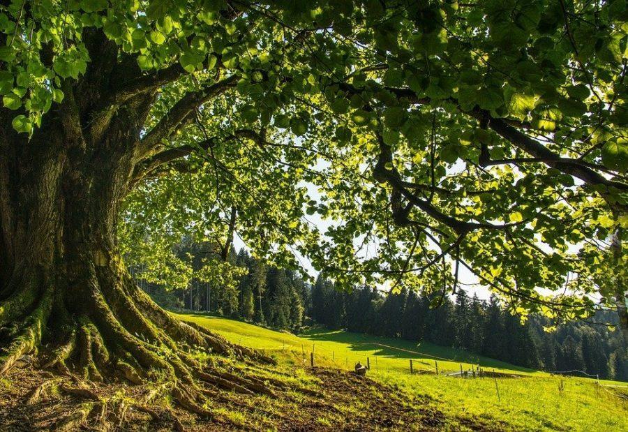 Cánh đồng, cây xanh
