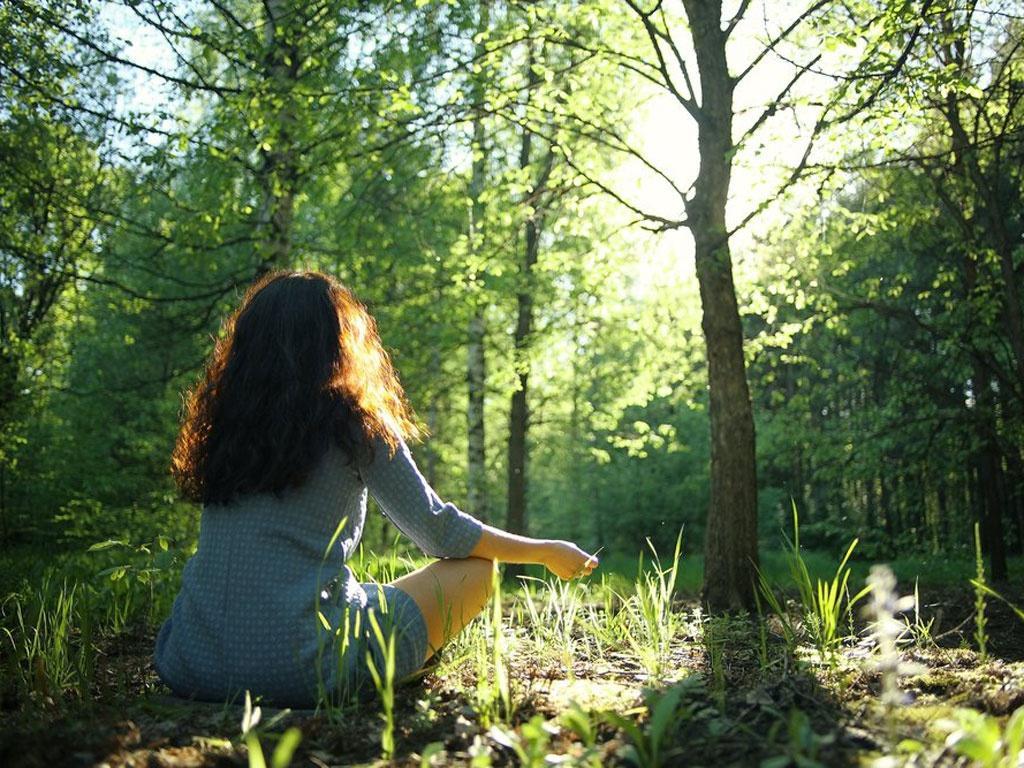 Liệu pháp rừng cây (tắm rừng)