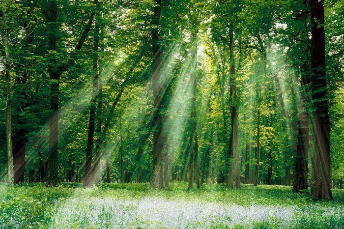 Liệu pháp tắm rừng (rừng cây thiên nhiên)