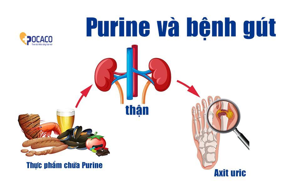 Purine và axit uric