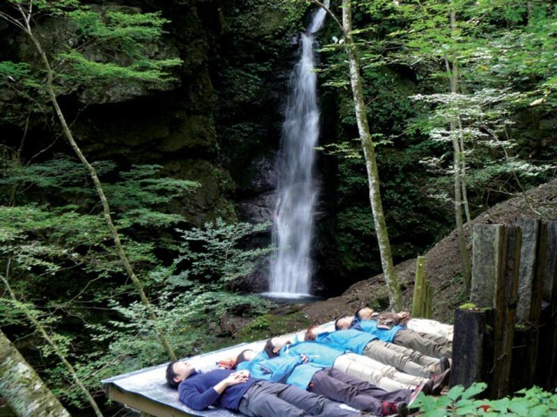 Tắm rừng - liệu pháp rừng cây điều trị tinh thần