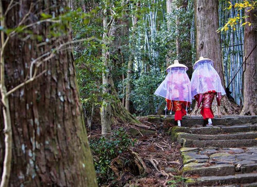 Tắm rừng Shinrin yoku - liệu pháp y học của người Nhật Bản