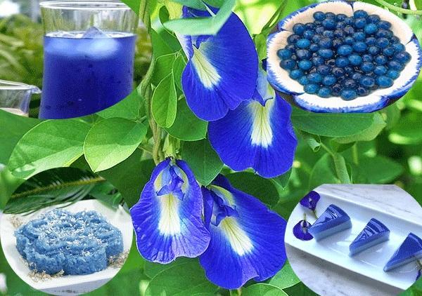 Tác dụng tạo màu của hoa đậu biếc