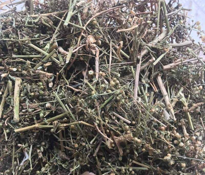 Cam thảo đất phơi khô có tác dụng gì