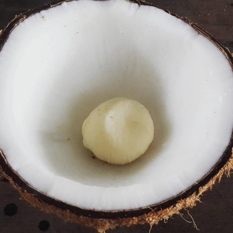 """Mộng dừa quá nhỏ nên ăn không """"đã miệng"""" và cũng không ngon bằng loại to bằng lòng bàn tay"""