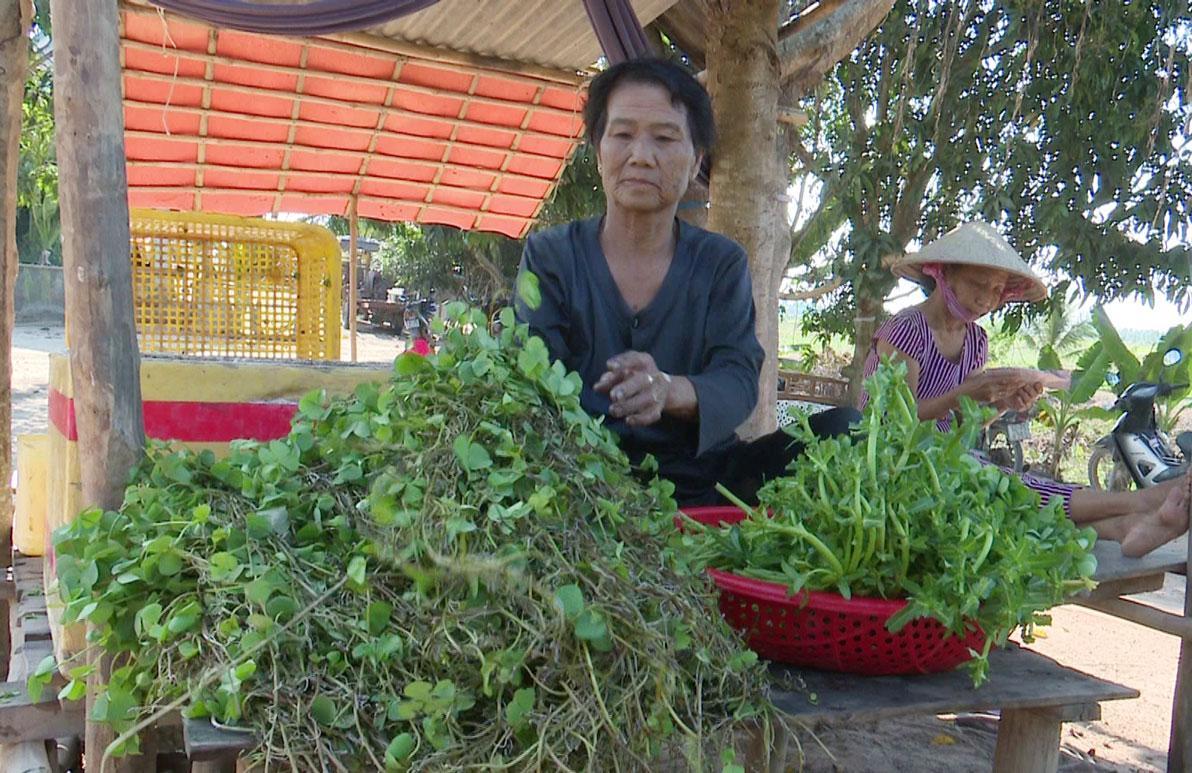 Rau bợ được bán để làm rau ăn