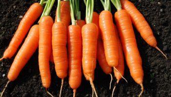 Củ cải đỏ